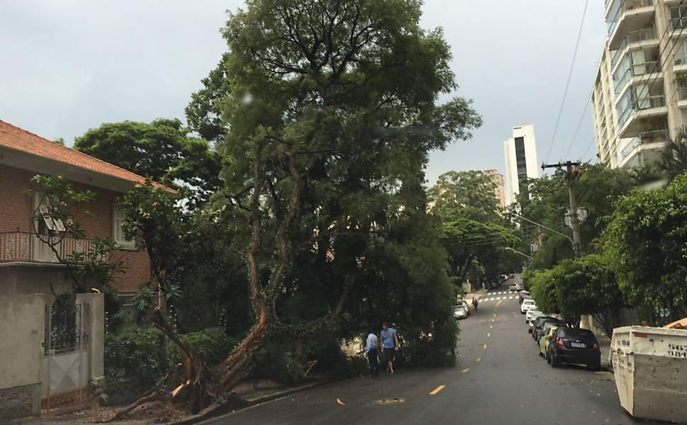 Árvore caída na rua Ceará, no bairro de Higienópolis