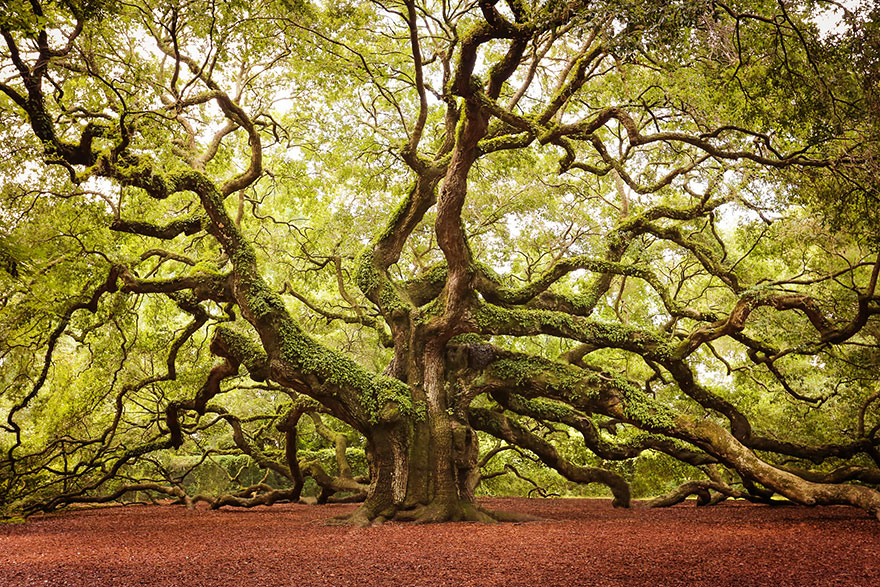 VF Angel Oak