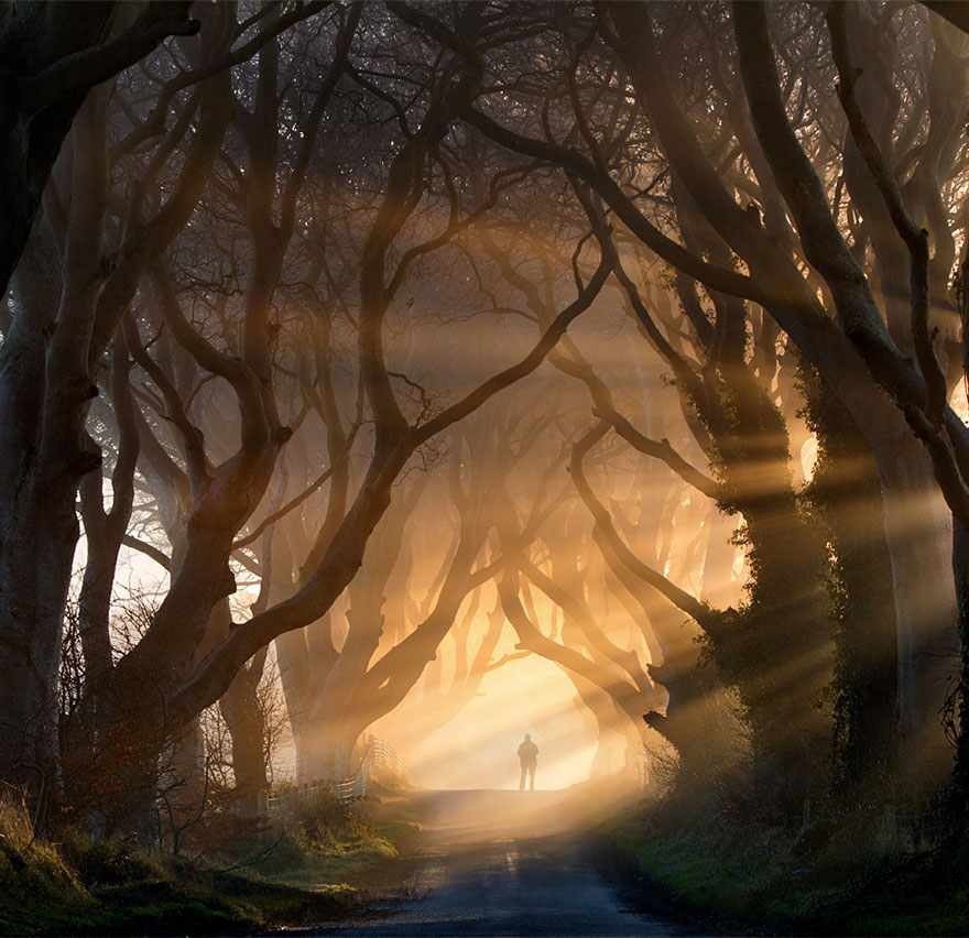 VF Dark Hedges
